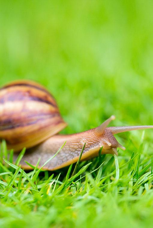 Pasze dla ślimaków